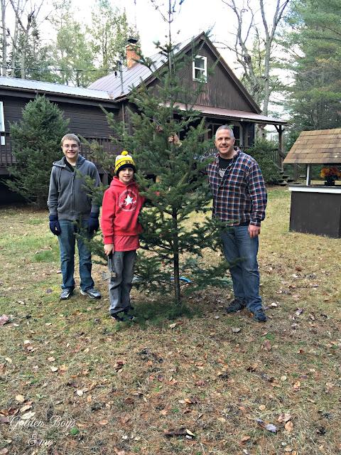 Cutting down the Christmas tree - www.goldenboysandme.com
