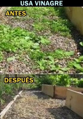 consejo-malas-hierbas