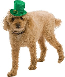 Mini Leprechaun Hat Pet Costume