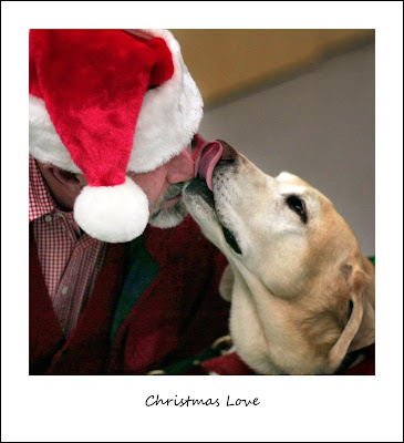 yellow Lab licks nose of man in Santa hat