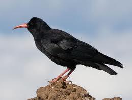 417d1.blogspot.com - Burung Gagak Mengajarkan Kepada Manusia Bagaimana Cara Menguburkan Mayat
