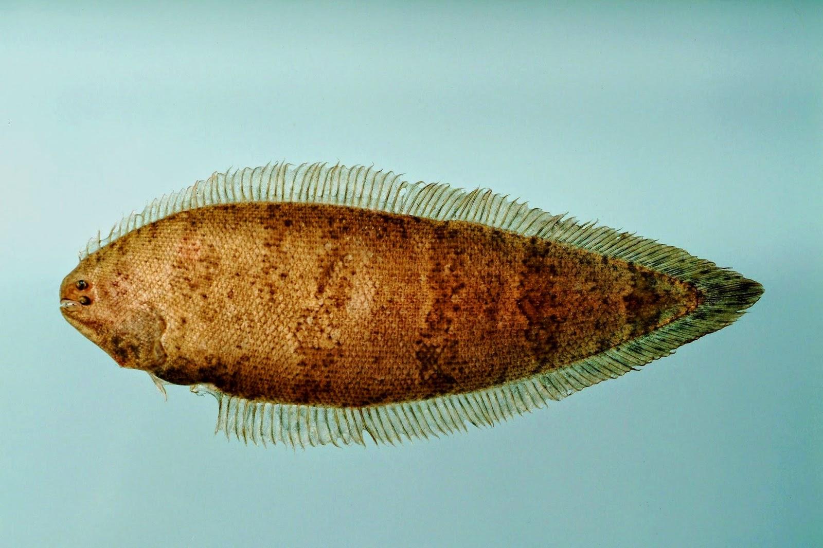 ikan unik yang berada di dasar laut