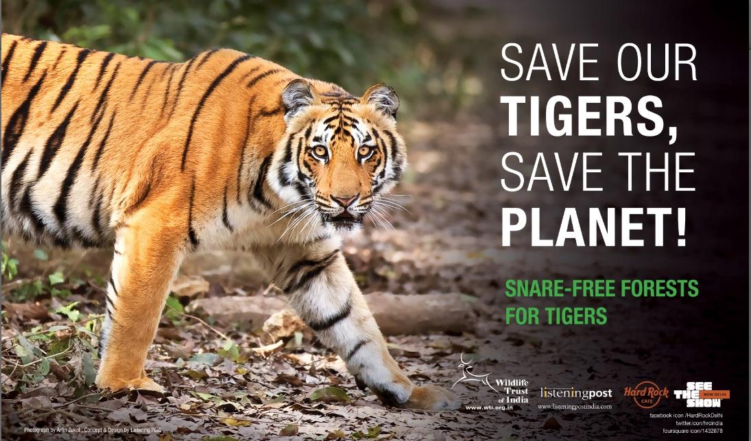 Save The Tiger Jitu222 Technology Seo