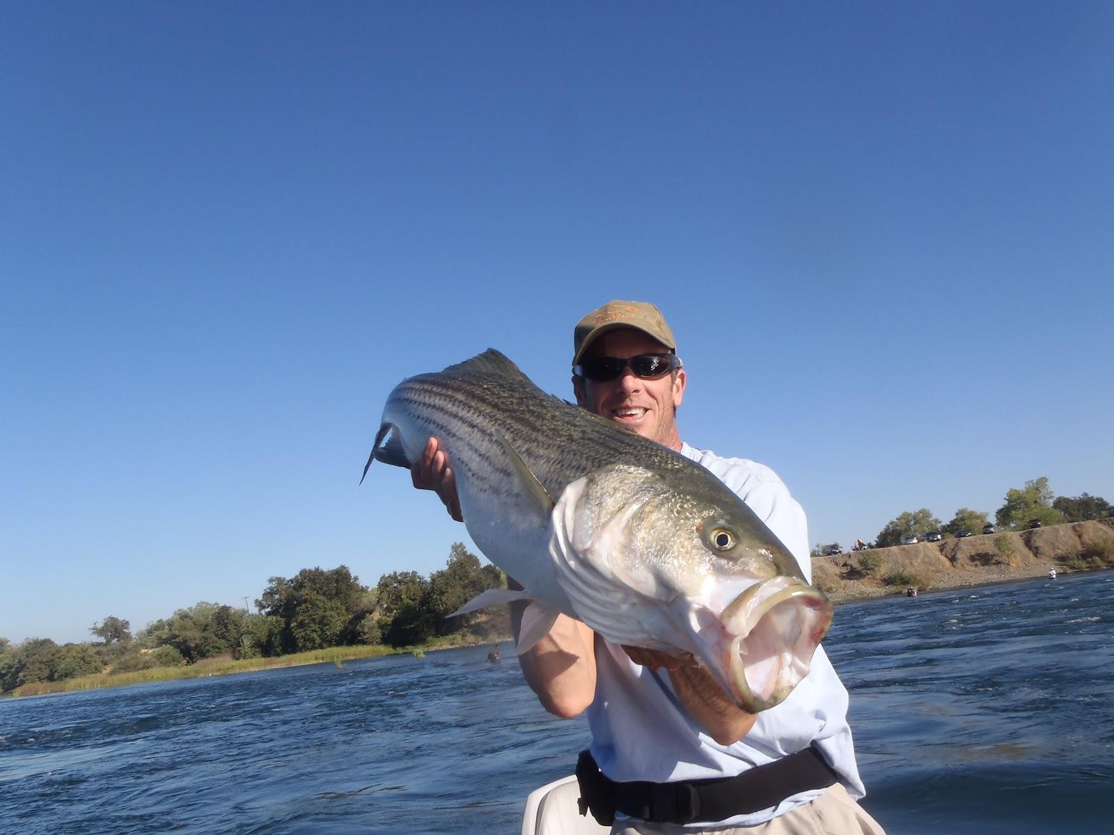 Irideus Fly Fishing Products Targeting California Trophy