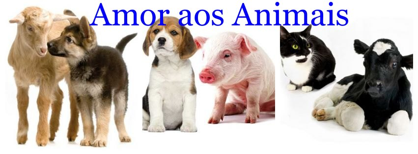 <center>Amor aos Animais</center>