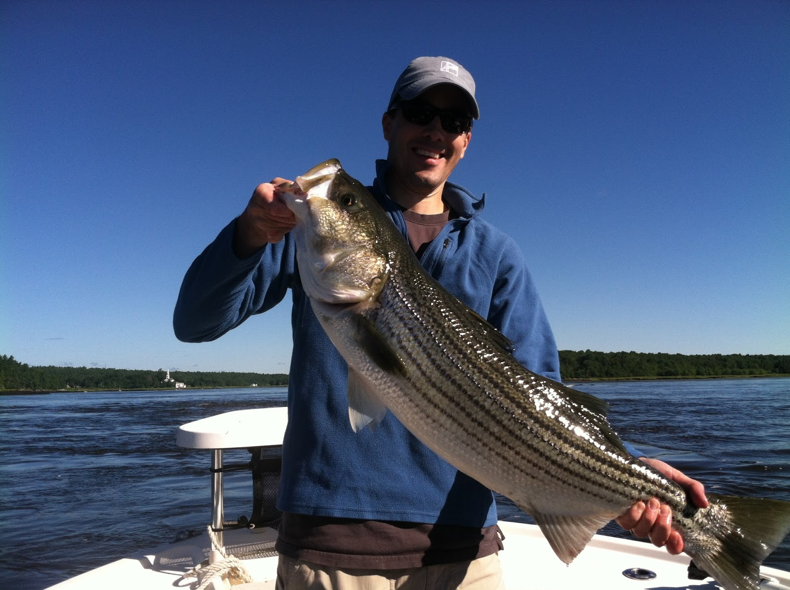 Maine striper fishing reports charters guided saltwater for Saltwater fishing report