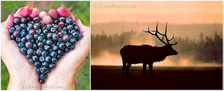 'Huckleberry Heart' and 'Elk Mist' (c) John Ashley
