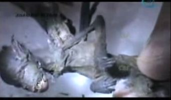 Demonic Fairy Captured, Biologist Says Creature Has Humanoid Body And Four Wings