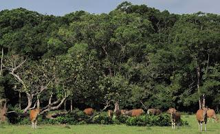 7 Obyek Wisata Favorite Di Taman Nasional Ujung Kulon