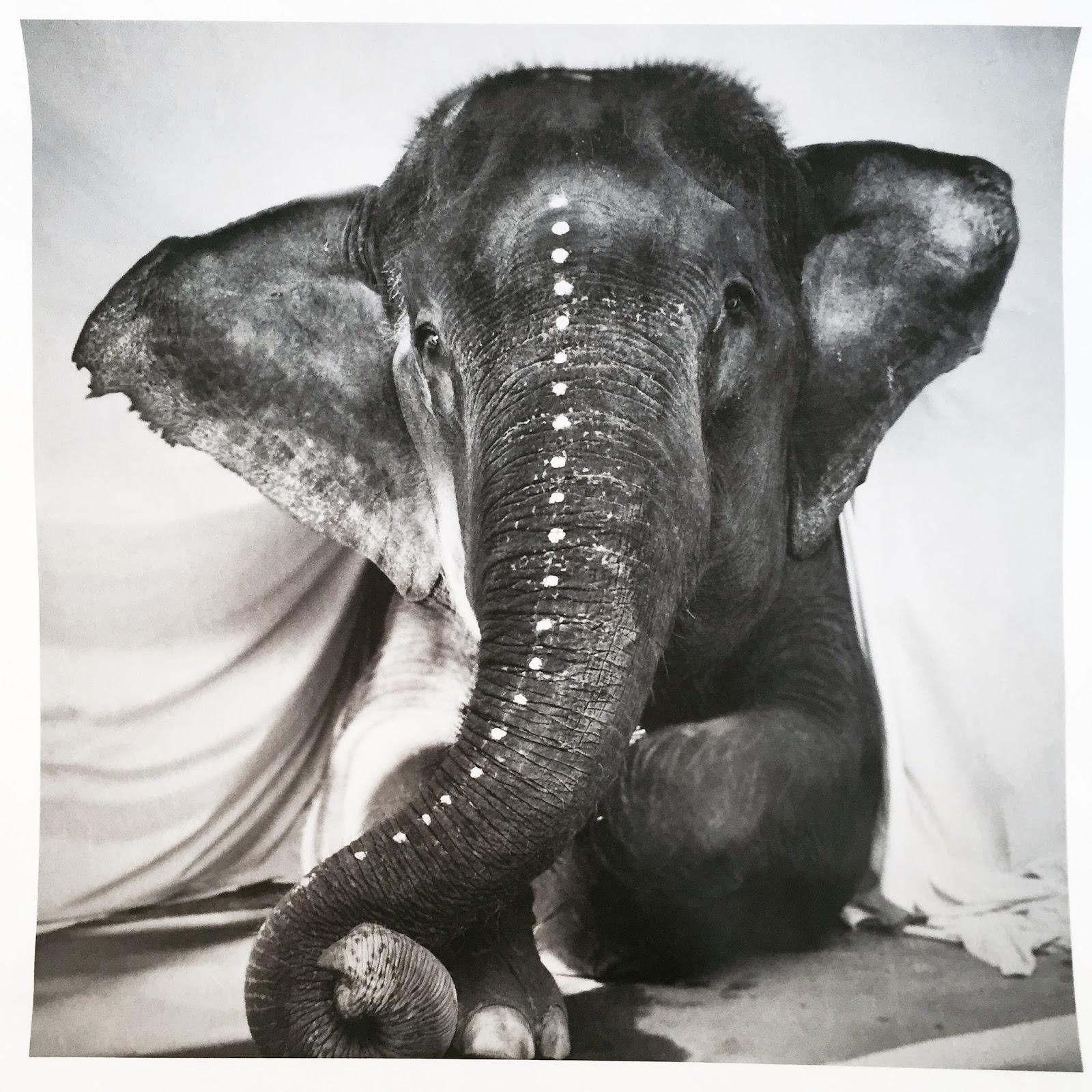 Член слона фотки 26 фотография