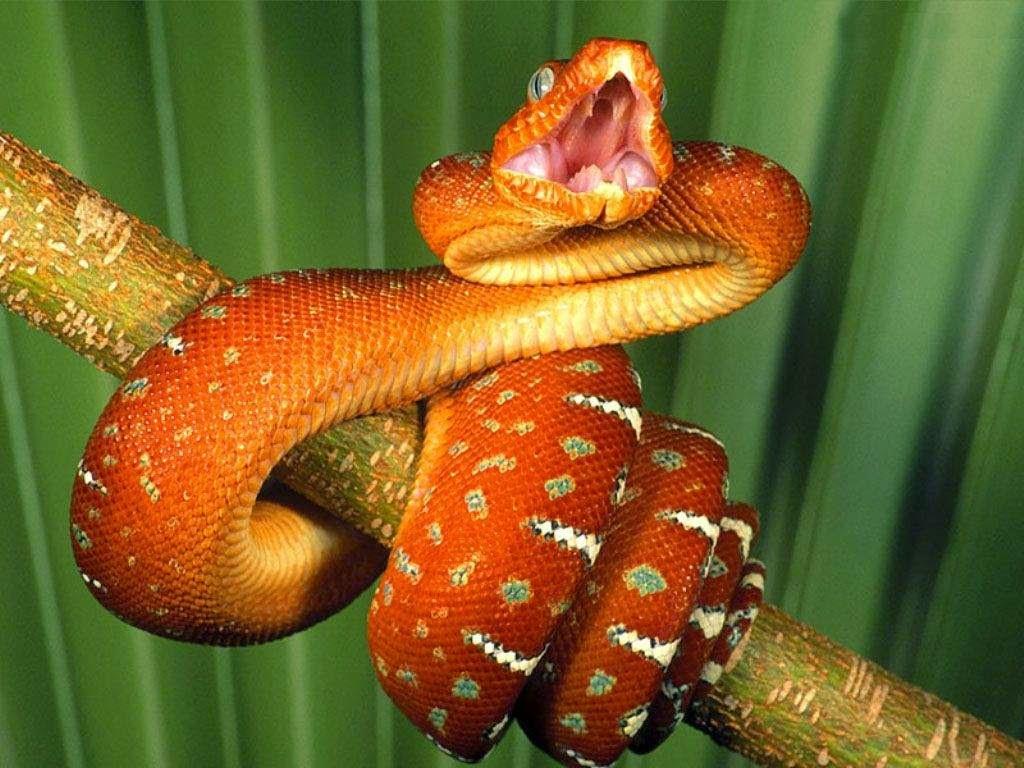 gambar ular piton   animasi korea meme lucu emo bergerak