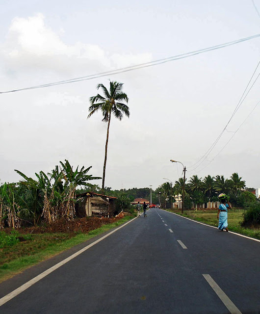 quiet road with palm trees in Goa, India