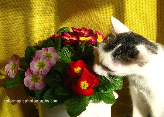 Cat smelling a flower bouquet