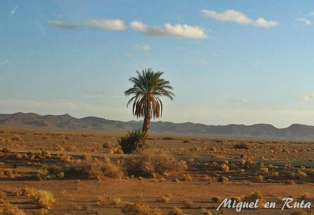 Palmera-desierto-Marruecos