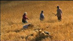 Vídeo IV | A Debulha do Trigo na Calheta