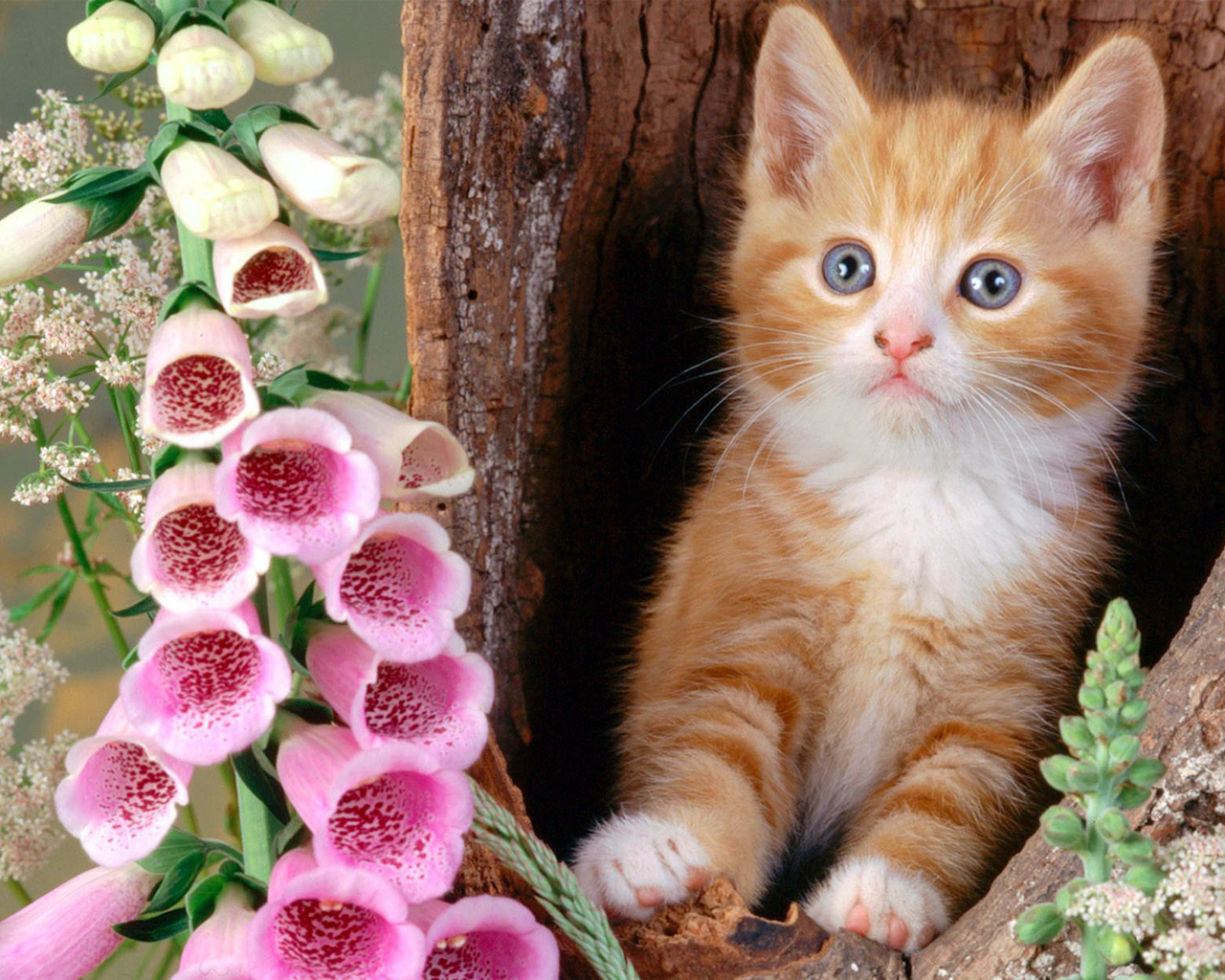 oh cute kittys!! - hd wallpapers ~ mass wallpapers