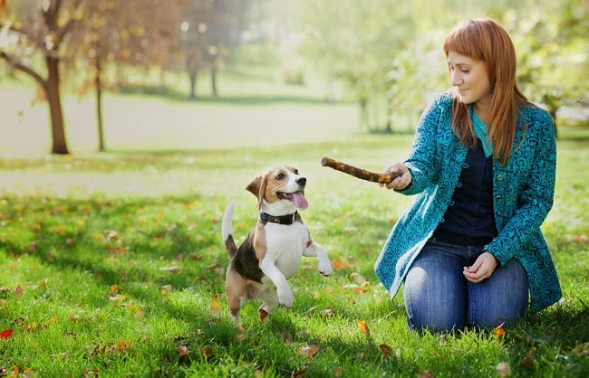 Socjalizacja psa