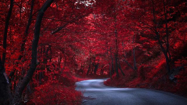 Camino entre los arboles