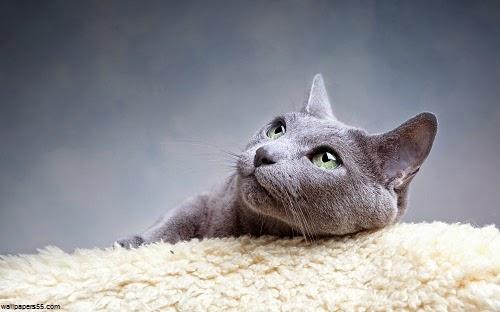 Chat mignon de détente sur une couverture