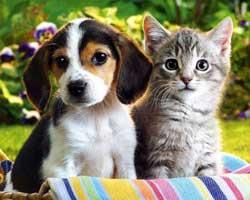 Anjing Lebih Pintar Dari Kucing