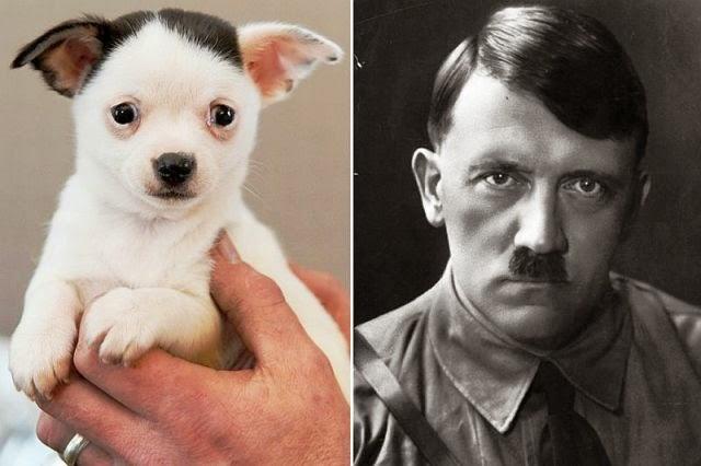anjing wajah mirip adolf hitler