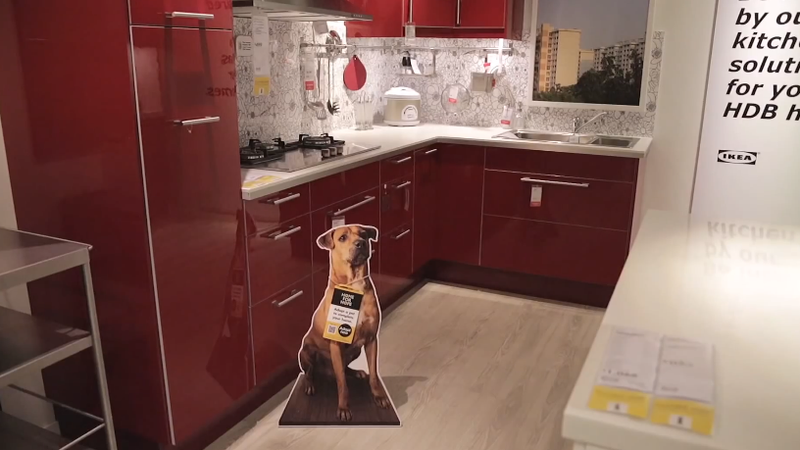 IKEA w genialny sposób pomaga znaleźć dom bezdomnym zwierzakom