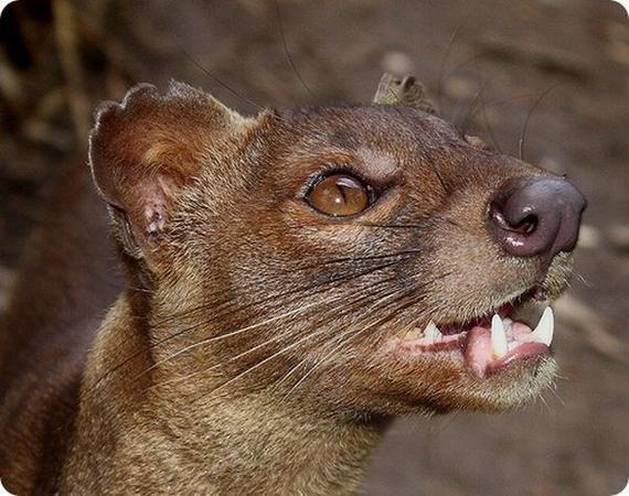 rarest animals in the - photo #7
