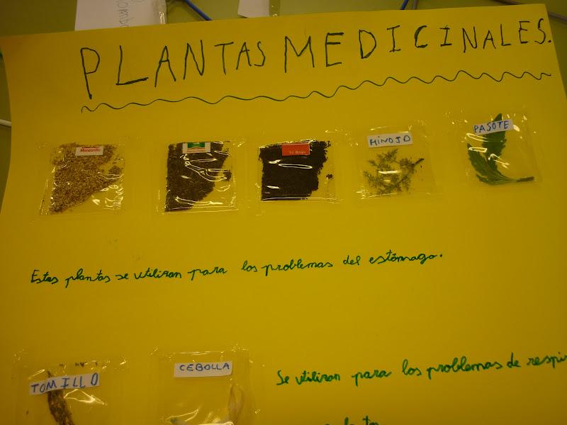 Ceip Mar A Jes S P Rez Morales Las Plantas Medicinales