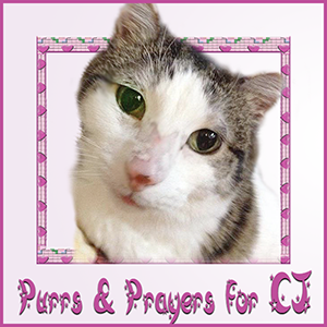 Dear CJ needs purrs and prayers