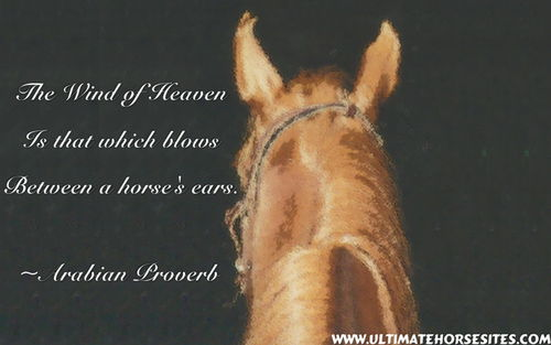 Horse Pictures With Quotes Some lovely horse quotes and