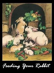 Feeding Your Rabbit