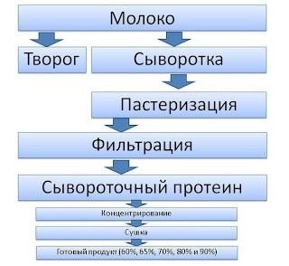 Производство белкового сывороточного концентрата. Схема