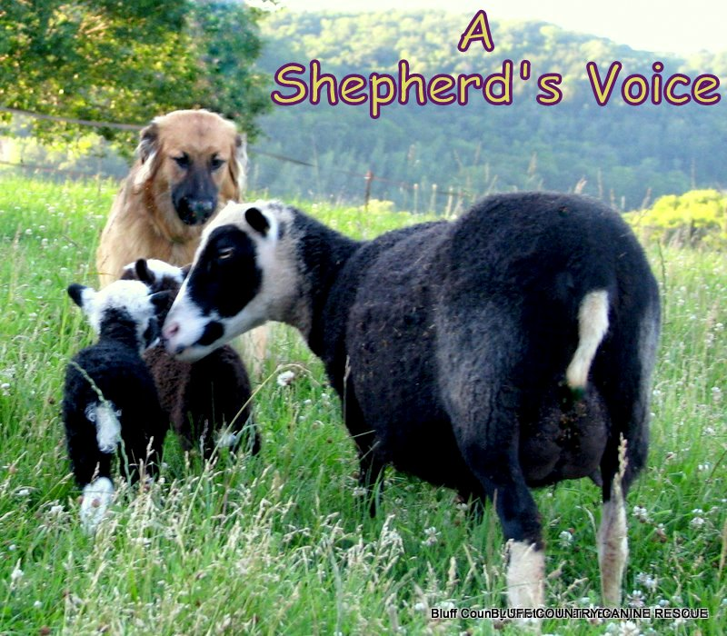 <b>  A Shepherd&#39;s Voice</b>