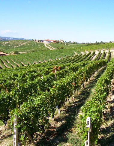 Giacomo Fenocchio vineyards in Piedmont