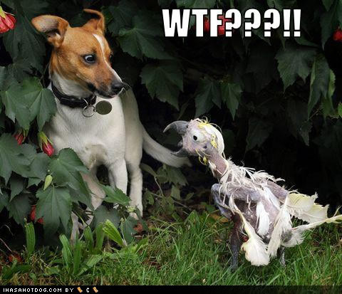 Funny Dog Pictures With Captions, Funny Dog Pictures,: funnyimagegallery.blogspot.com/2012/02/funny-dog-pictures-with...