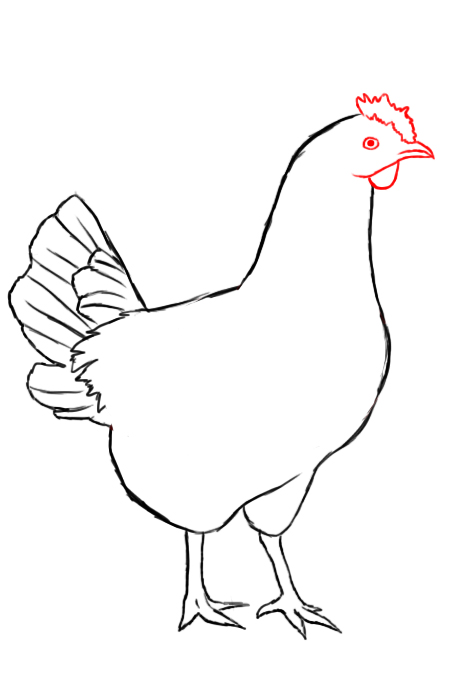 draw in your chickens tiny beak with a wattle small flap of skin beneath its beak