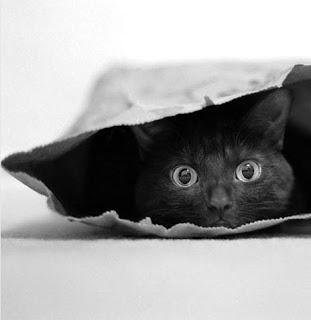 """""""Кот в мешке """" от Ольги Д."""