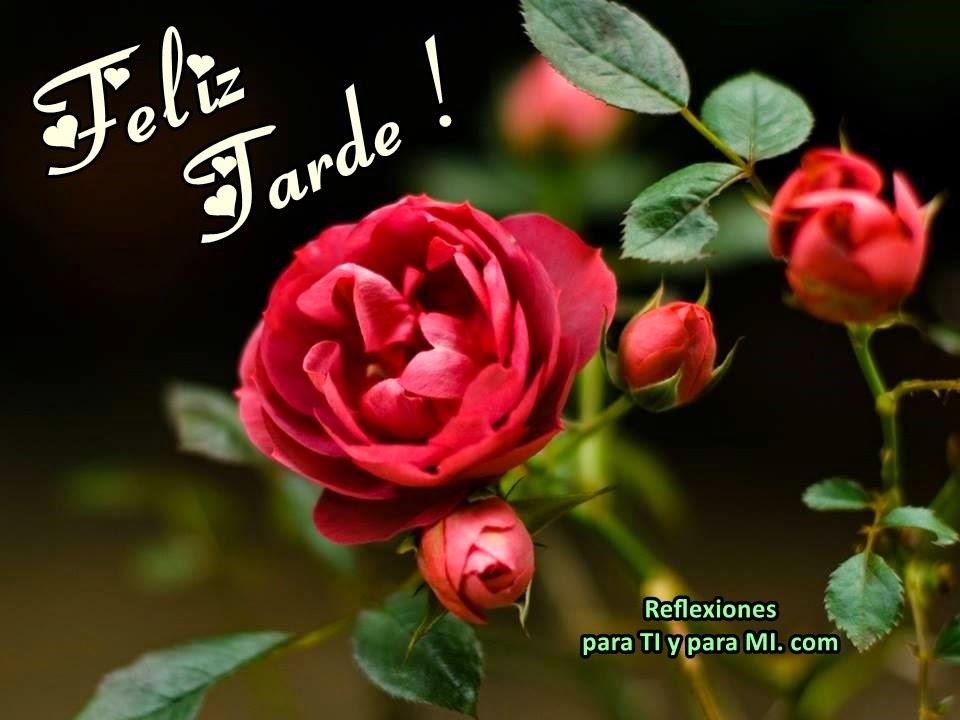 Buenos Deseos para TI y para MÍ: * Feliz Tarde ! (Hermoso rosal)