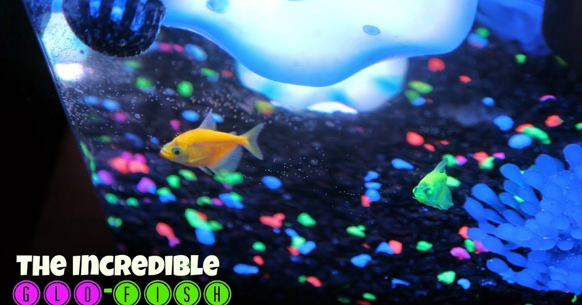 Lille punkin 39 they swim they glow meet our new glofish for Glow in the dark fish walmart