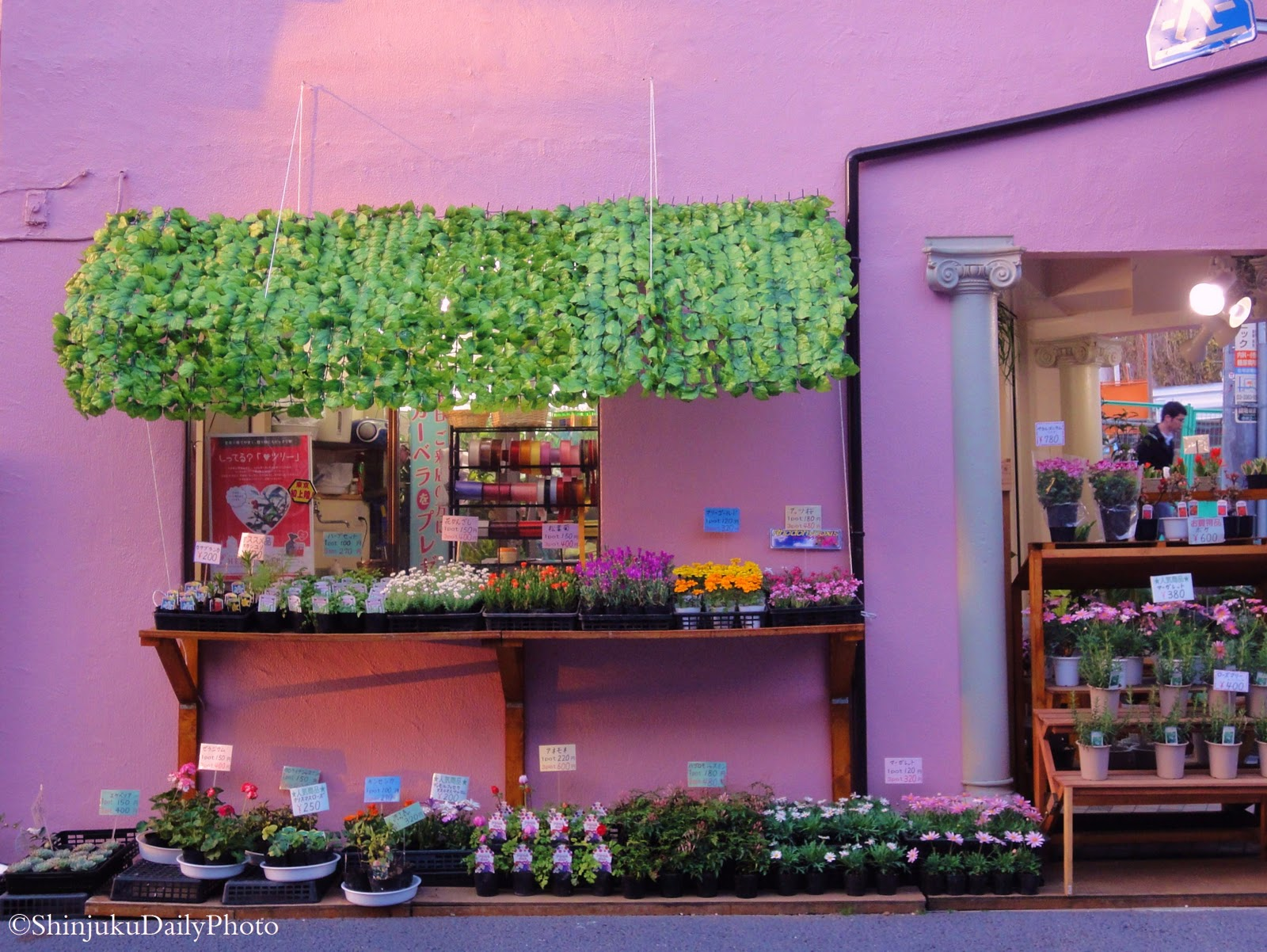 Shinjuku Daily Photo The Flower Shop