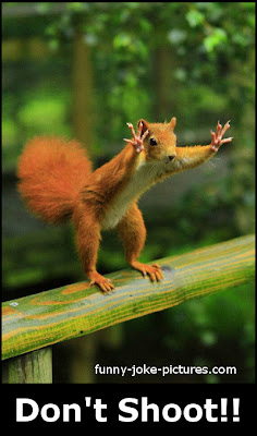 Funny Squirrel Photo Picture Shoot