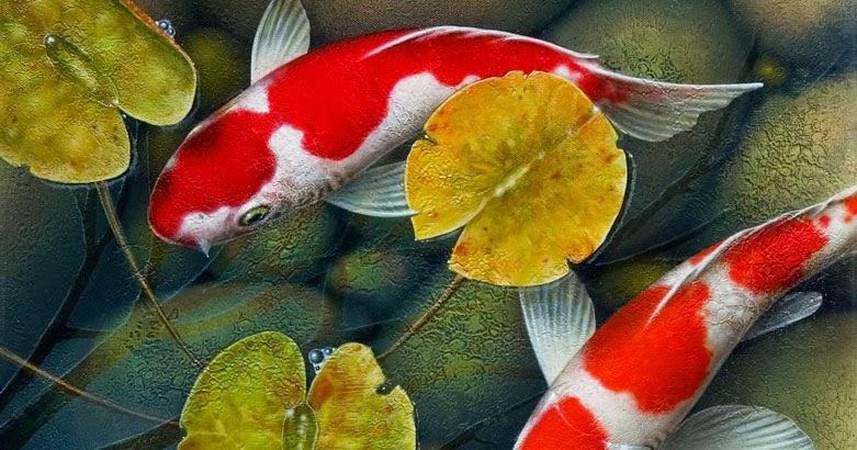 Cara merawat ikan koi agar warnanya tajam gerak maju for Koi 1 utama