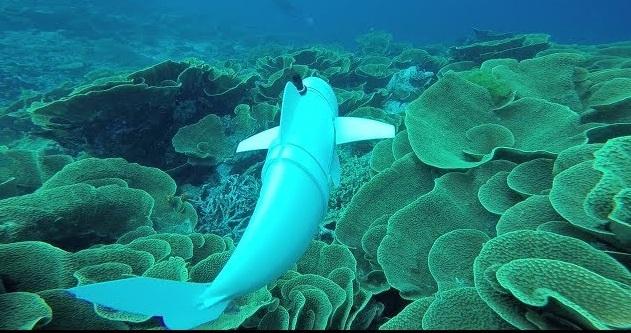 Σόφι, τo πρώτο ρομποτικό ψάρι- Τόσο αληθινό που το ερωτεύονται τα αληθινά [βίντεο]