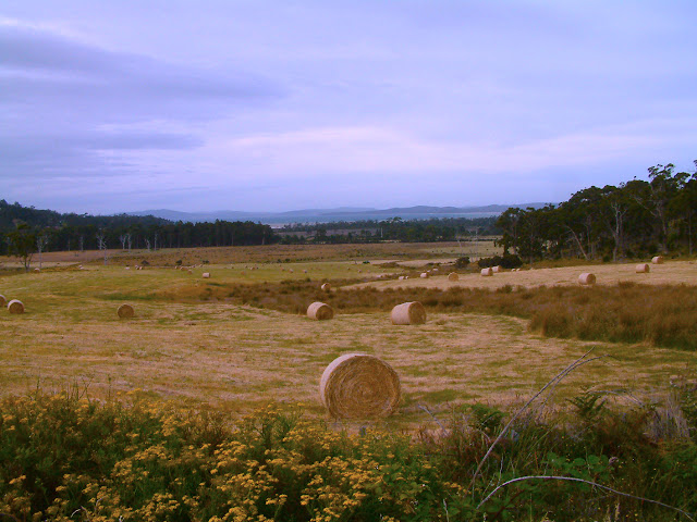 growing plants in hay bales Email This BlogThis! Share to Twitter Share to Facebook Share to ...