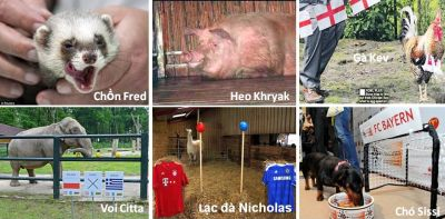 ### Giải Túc Cầu Euro 2012 ### NhungNhaTienTriEuro2012-Vntvnd