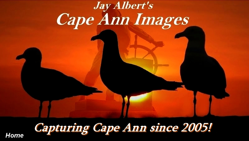 Cape Ann Images