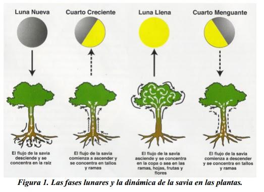 La luna en agricultura biológica | Agricultura biológica