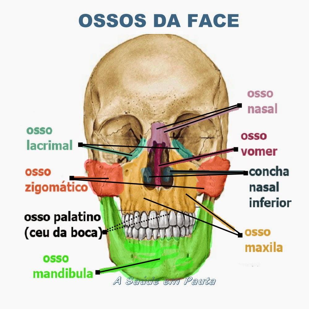 Nomes e localização dos ossos da face