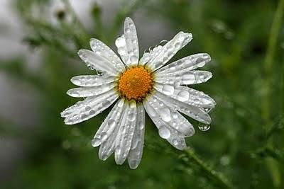Felices d as de lluvias biznagarden empresa de jardiner a - Empresa jardineria malaga ...