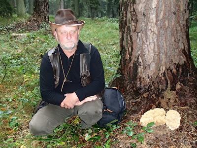 grzyby wrześniowe, grzybobranie we wrześniu, siedzuń sosnowy, szmaciak gałęzisty, Sparassis crispa